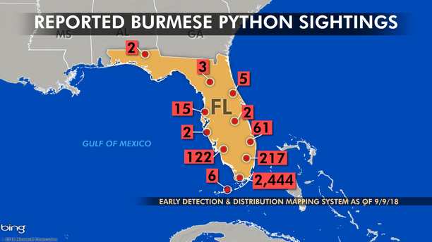 Researchers say it is difficult to determine whether python sightings north of the Florida Everglades are a result of migration or pet releases.