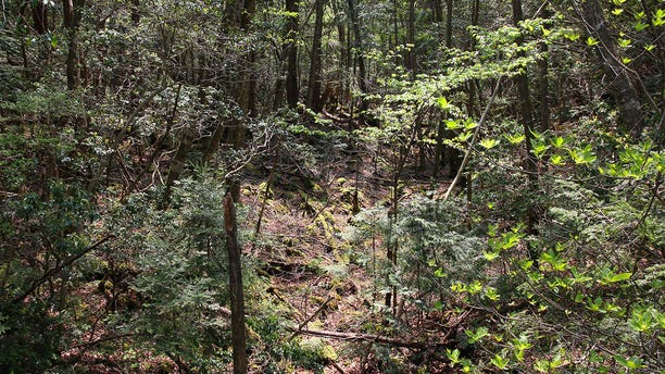 """A 1961 novel is partially credited with popularizing the suicidal reputation of Aokigahara, or the """"Sea of Trees."""""""