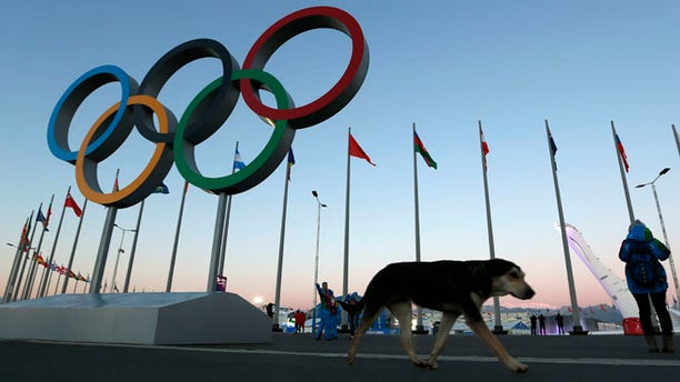 Feb. 3, 2014: A stray dog walks past the Olympic Rings in Olympic Park, three days before the start of the 2014 Winter Olympics 2014, in Sochi, Russia.