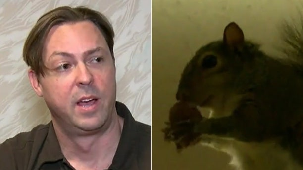 Ryan Boylan claims his squirrel Brutis is a support animal for his PTSD.