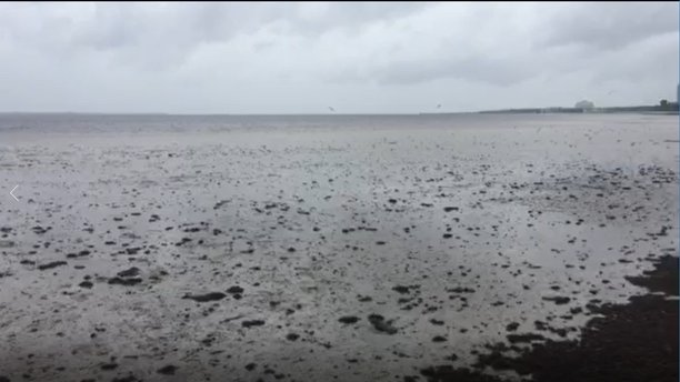Water in Tampa Bay were pushed out of Tampa Bay, leaving only a mucky seabed Sunday morning.