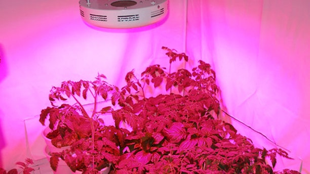 Sunshine Systems GrowUFO LED Lamp