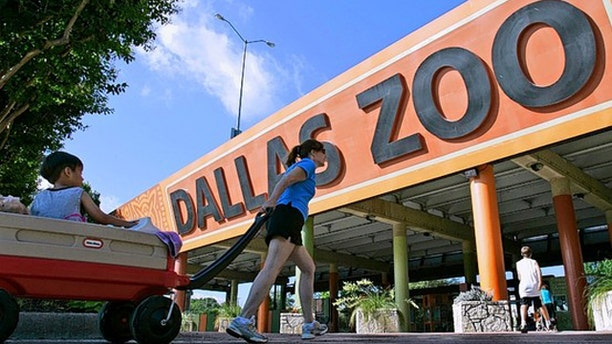 Dallas privatized the operation of its zoo, shown here. (AP Photo)