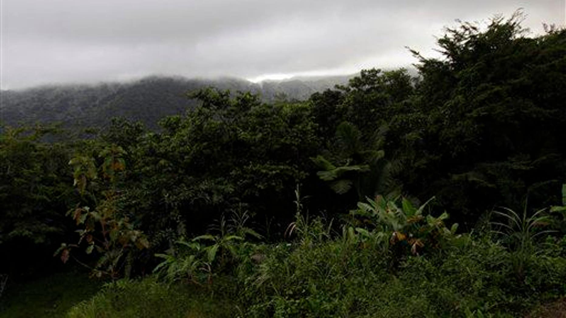 A dense cloud covers the top of El Yunque mountain in Puerto Rico.