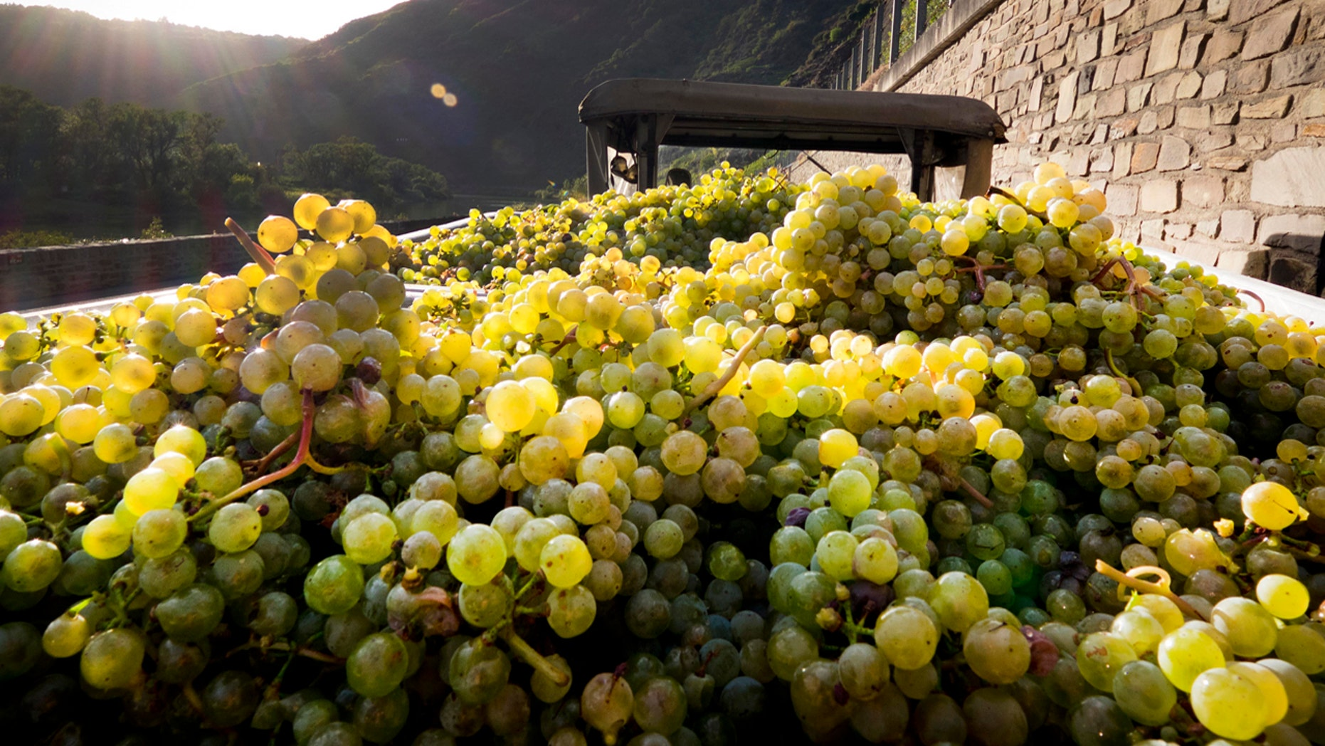 FILE: Grapes lie on a trailer on the bottom of the Calmont vineyard near Bremm, Germany. Nicolas DeMeyer, 41, was scheduled to plead guilty before a Manhattan federal judge to stealing $1.2 million worth of rare wines before jumping to his death Tuesday.