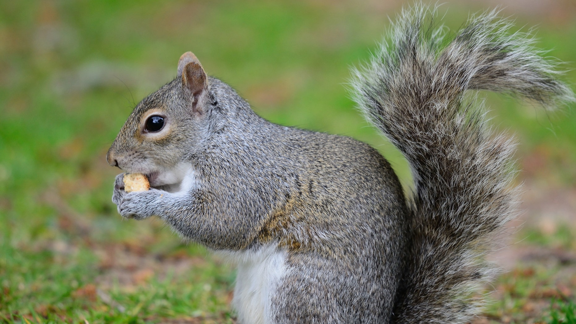 Man's death linked to consumption of squirrel brains
