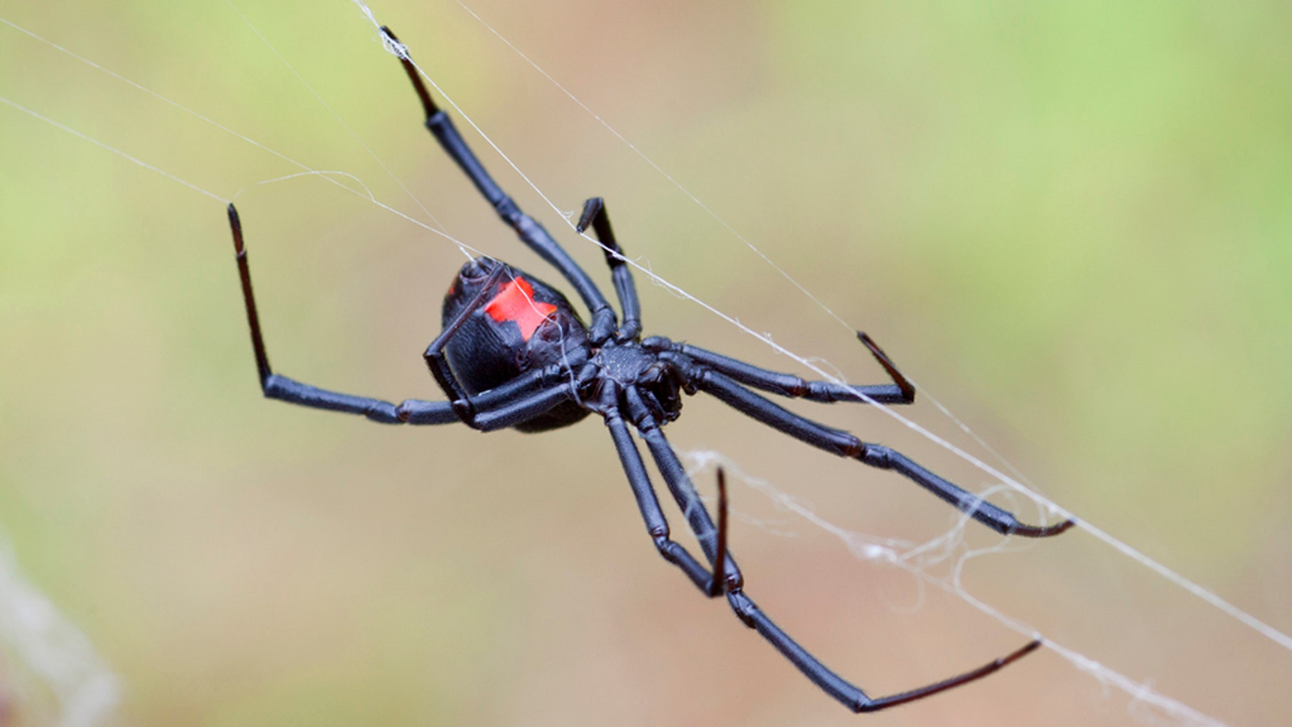 A man reportedly used a blowtorch to kill black widow spiders at his parents' home in northeast Fresno, California.