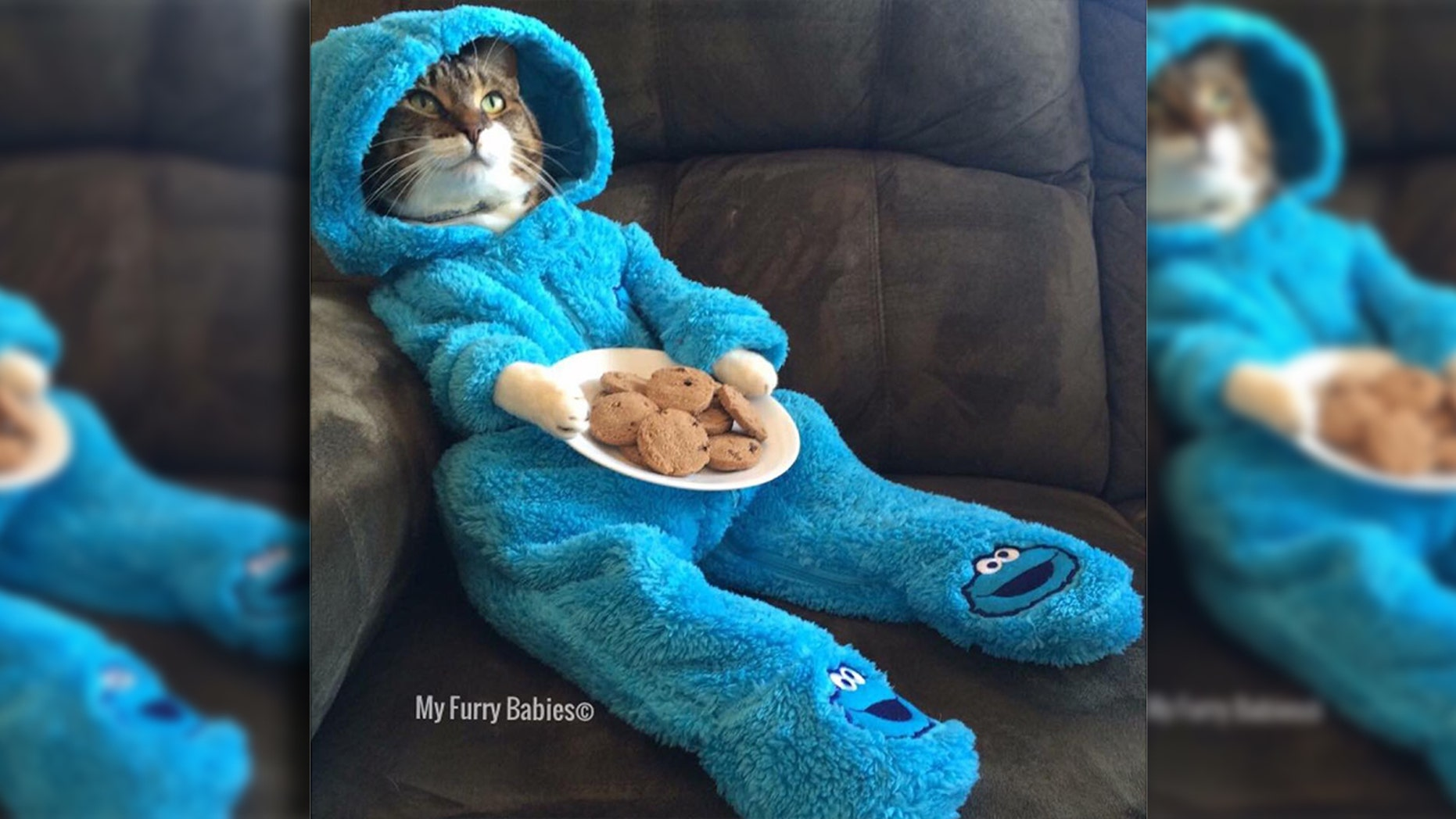The U.S. Department of State sent out an email featuring this tabby cat dressed as the Cookie Monster.