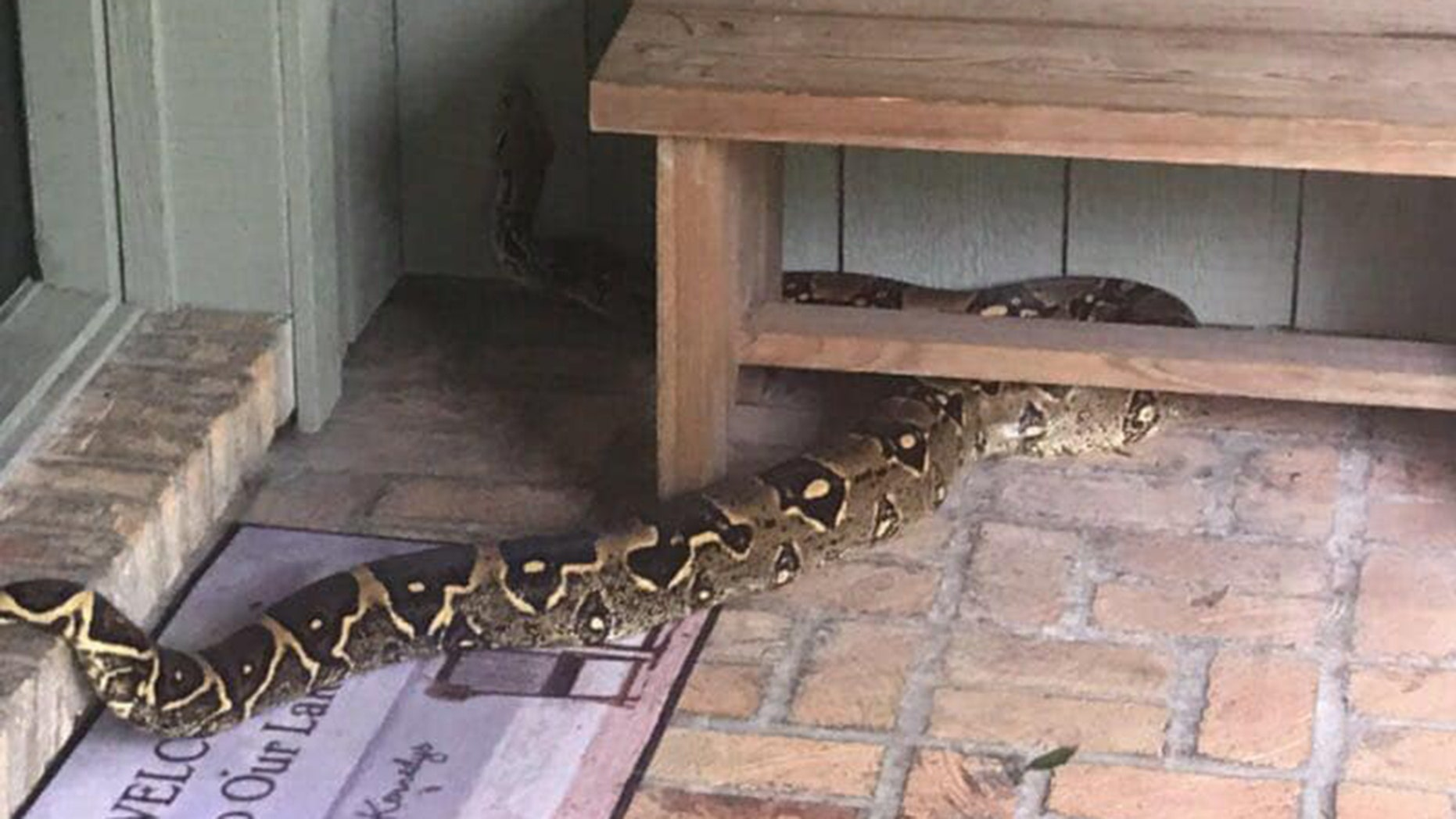 An 8-foot-long boa constrictor was handed over to the Florida Fish and Wildlife Conservation  Commission after it was spotted outside a Florida home Wednesday, officials said.