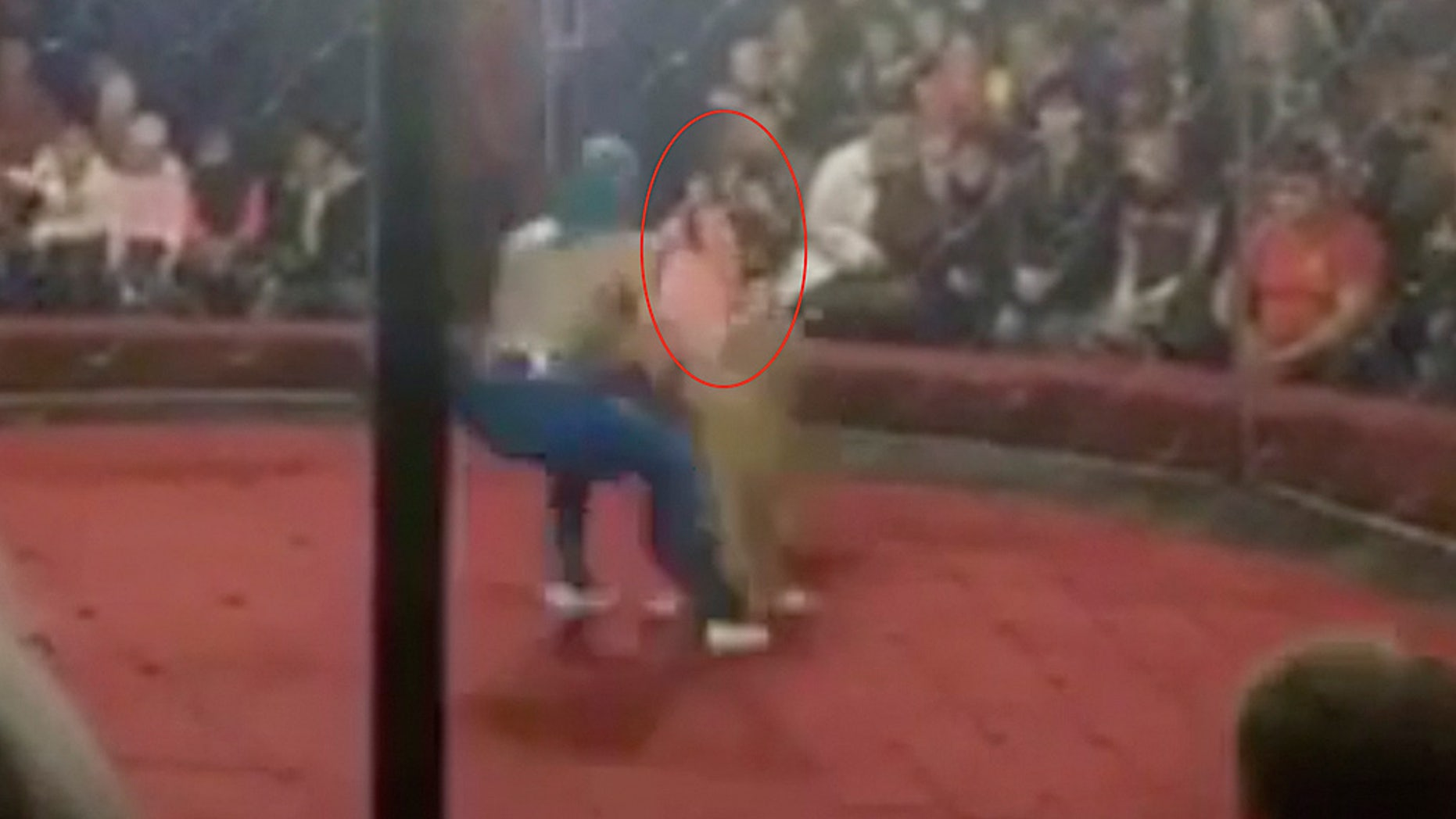 A lion at a circus in theKrasnodar region of Russia broke free and bit the girl's face, a medical responder says.
