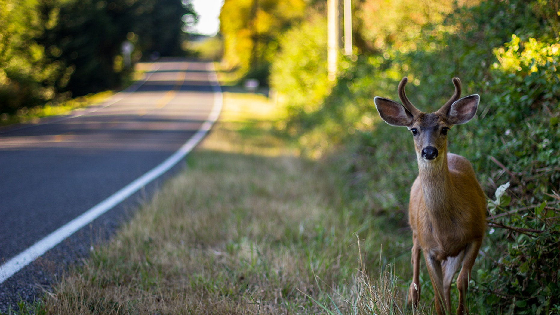 A marathon runner finished her race despite being smashed into by a deer three miles before the finish.