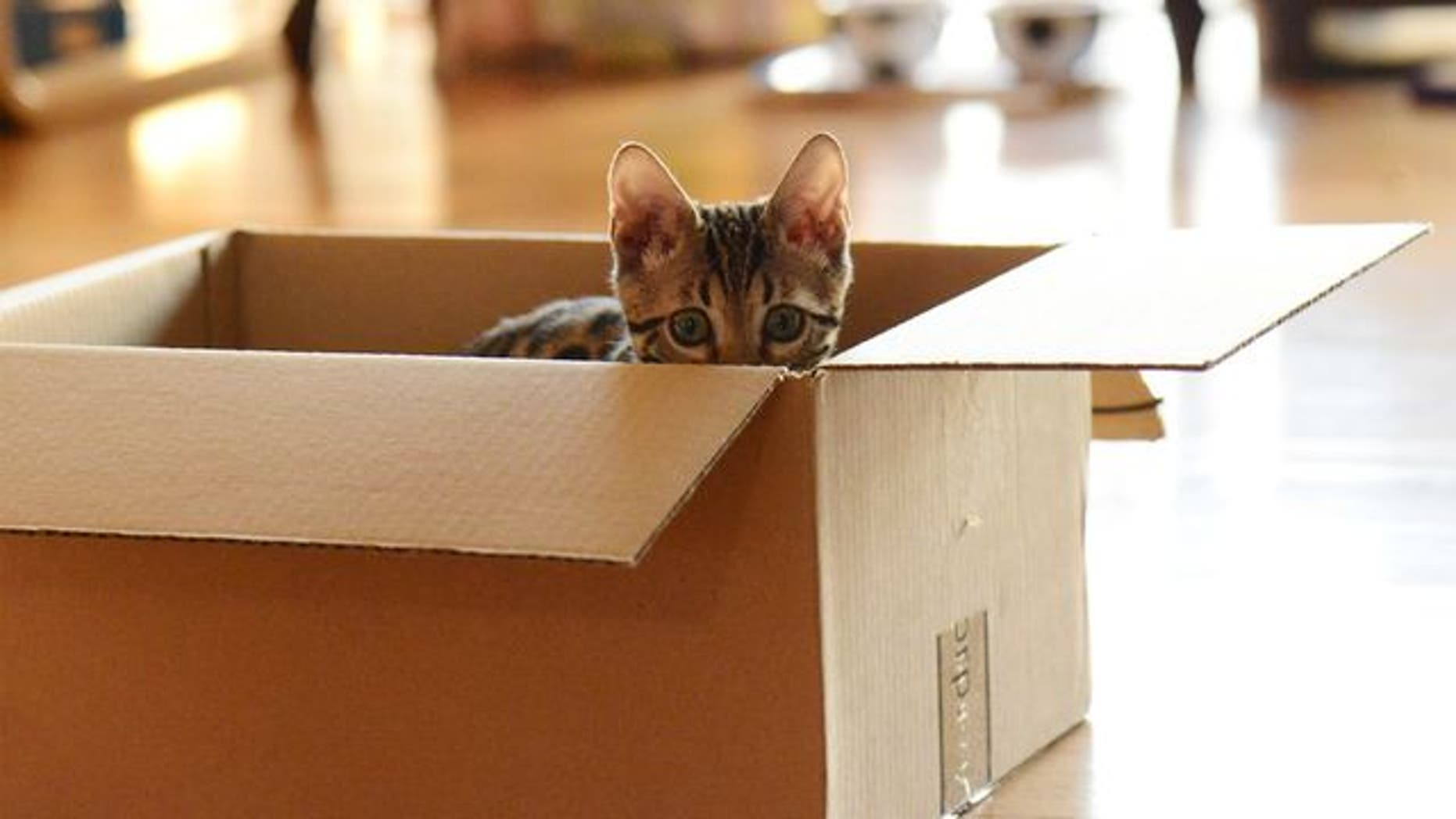 When looking at adopting, Hannah Shaw suggests people turn to shelters instead of choosing free kittens from maybe neighbors or classified ads.