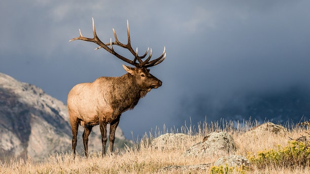 A man has been cited for violating two laws during the state's first regulated elk hunt.