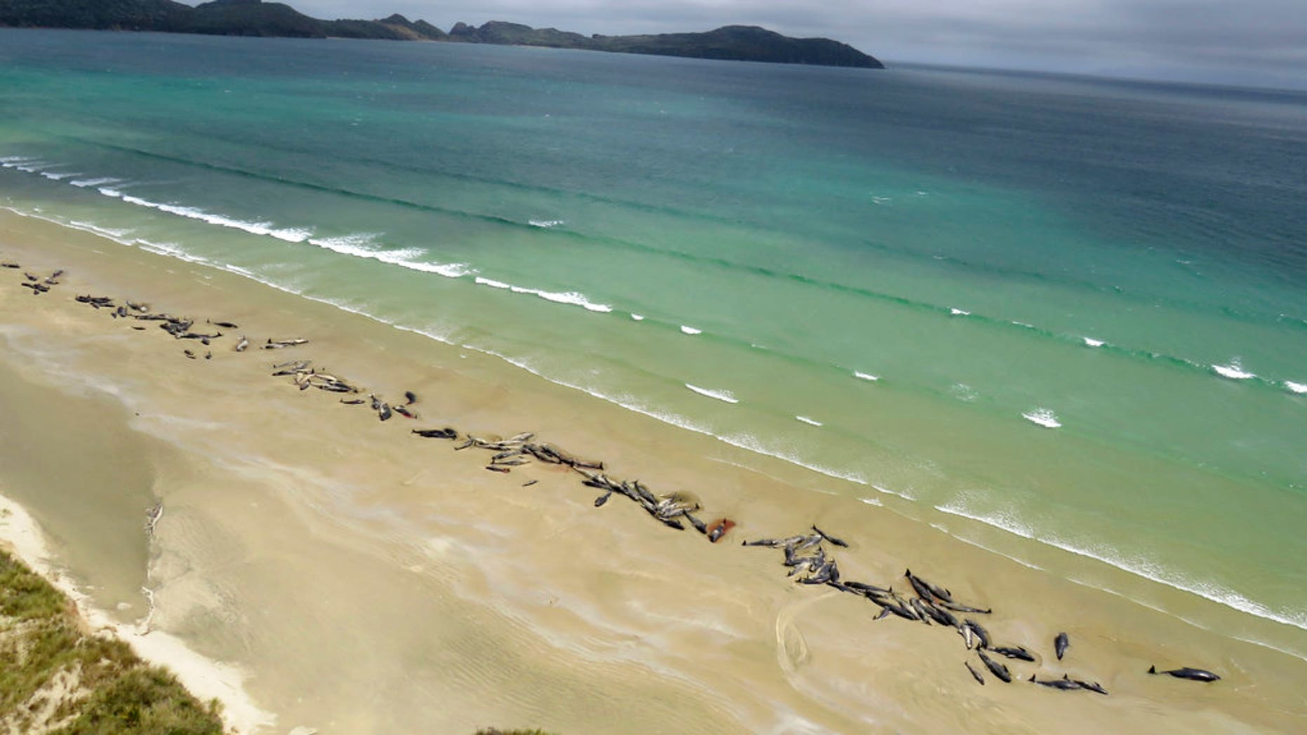More than 140 whales die after becoming stranded on New Zealand beach