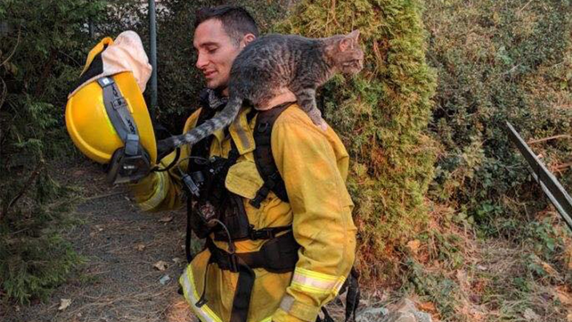 """Foster"" the cat was rescued on Monday after being burned in California's Camp Fire, the department wrote on Facebook."