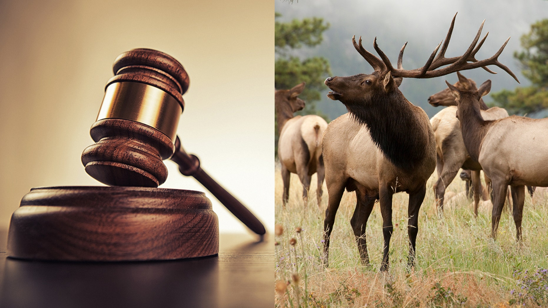 Marvin Doherty was handed a deferred four-year sentence and ordered to pay tens of thousands of dollars after he and four employees led unwitting clients on illegal hunts.