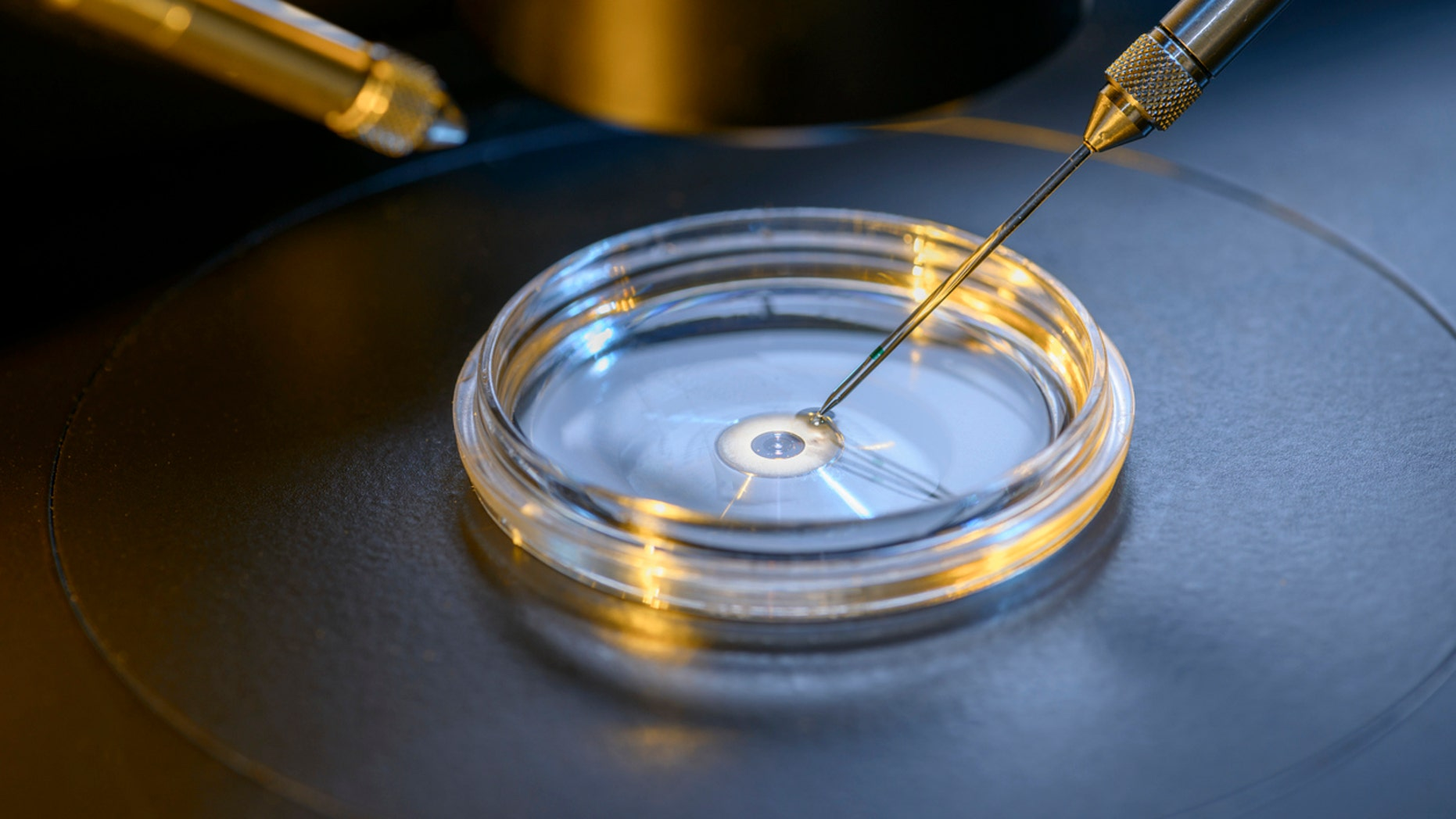 An estimated 8 million babies have been innate from IVF worldwide given 1978, according to a report.