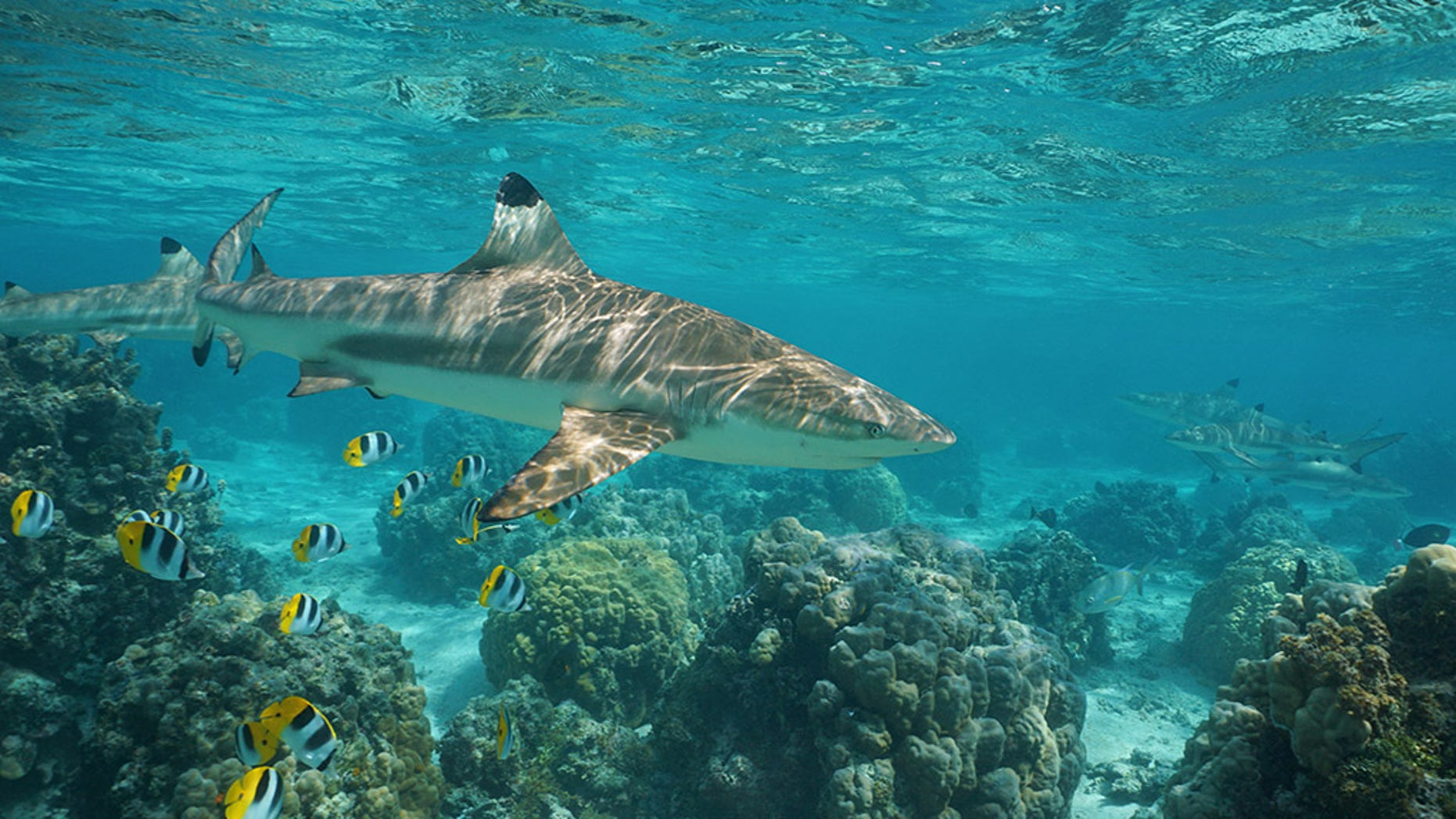 The reef shark attacked Krause's neck and head, he said.