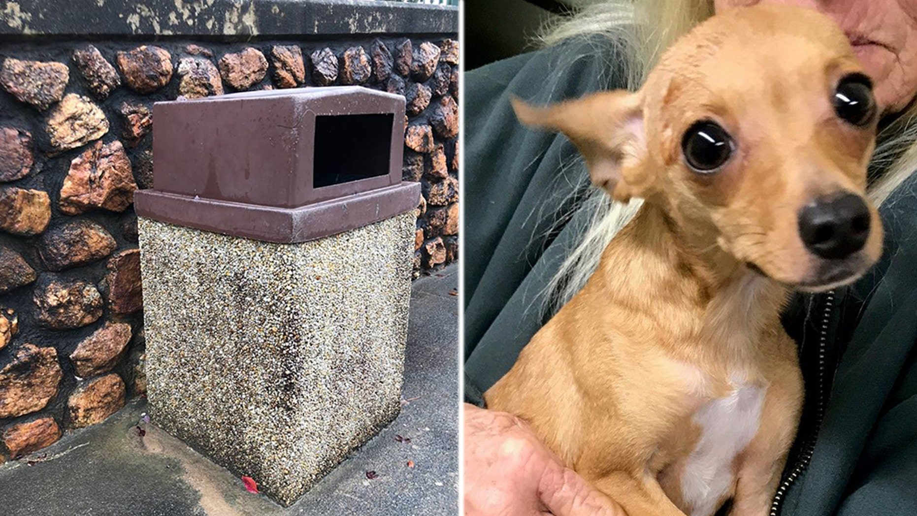 """The dog, now named Caroline, was found in a trash can """"freezing, wet, hungry and scared"""" the rescue group said."""