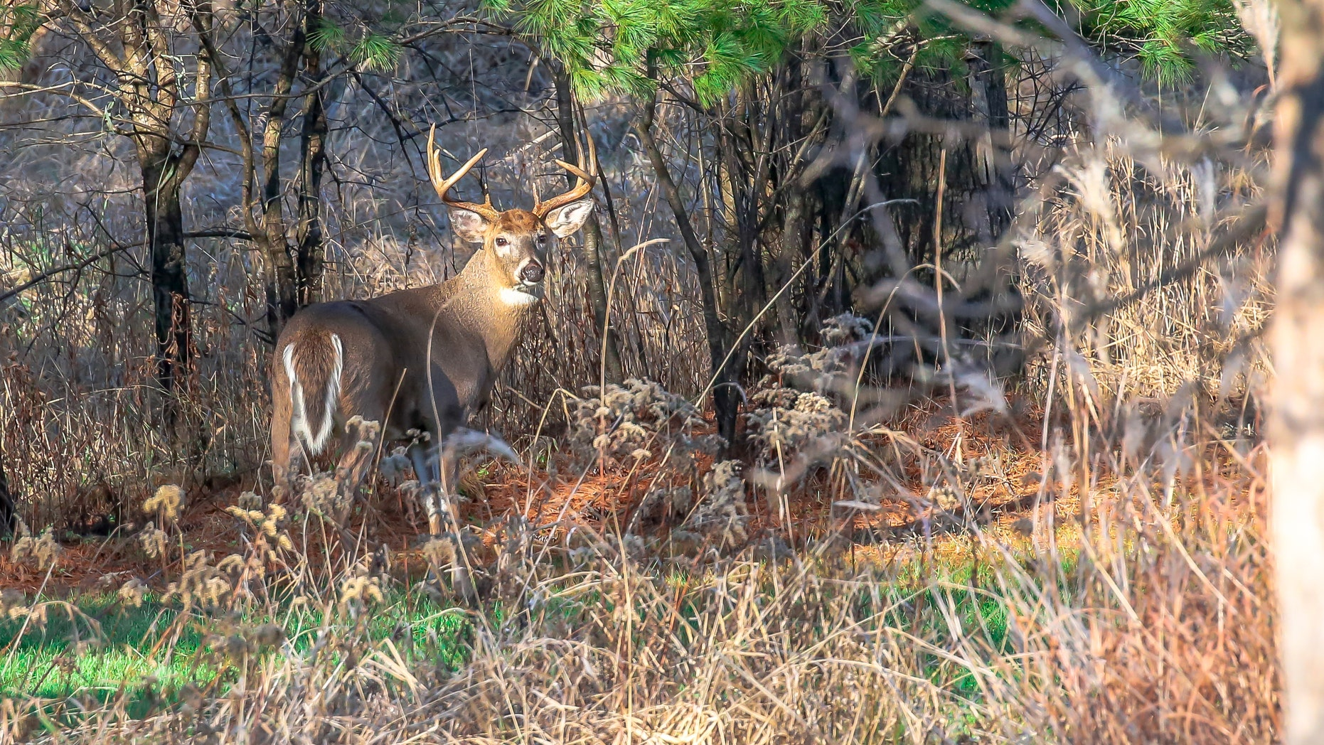 The facilities concerned are not allowed to move live deer on their premises, but they may choose to keep the unaffected deer alive.