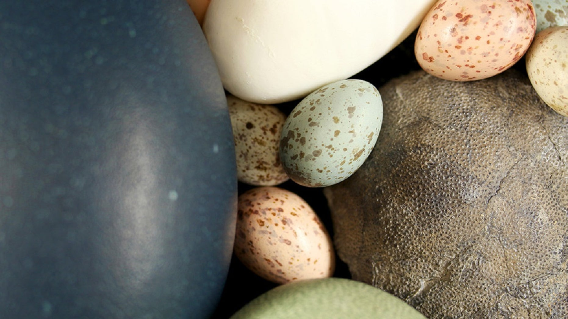 "A team of researchers has found that ""birds inherited their egg color from non-avian dinosaur ancestors that laid eggs in fully or partially open nests,"" Yale University announced Wednesday."