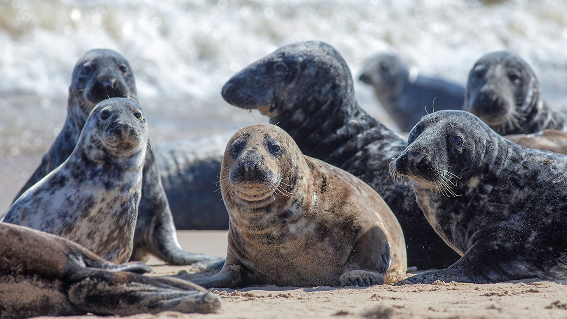 A fisherman in Scotland had to be rescued after encountering a group of aggressive seals, officials said. (istock)
