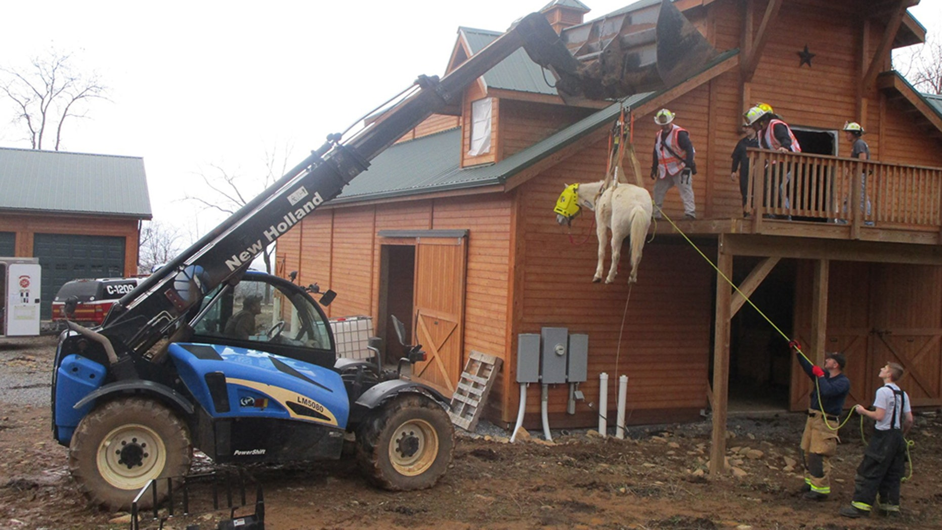 Holly, a 12-year-old Welsh Percheron cross pony, had to be rescued after getting stuck in a hayloft in Virginia.