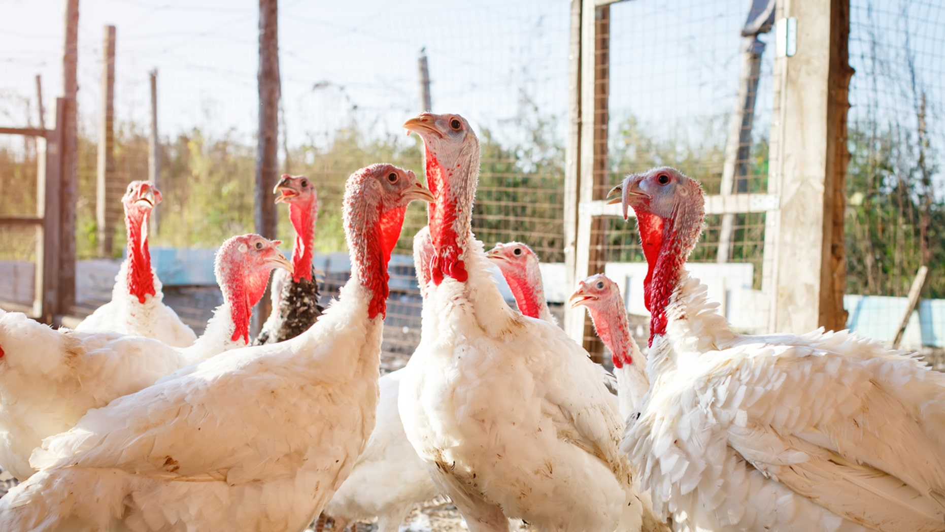 A recent salmonella outbreak involving turkey products has killed at least one person and sickened more than 160 others, public health officials say.