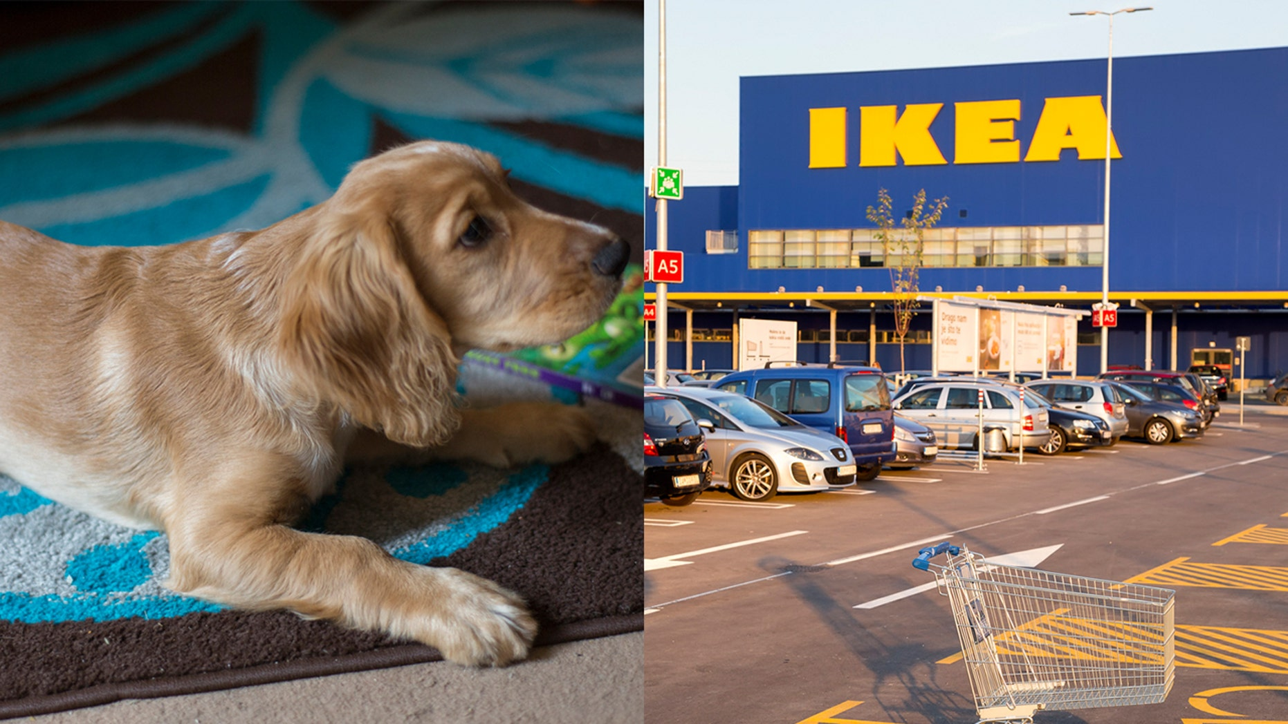 The furniture and home accessories retailer has opened its doors for stray dogs.