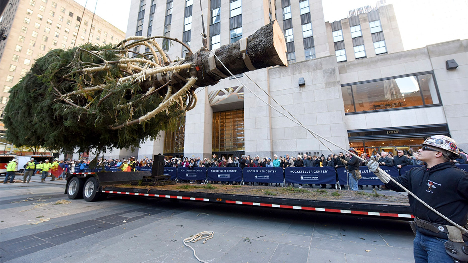 Workers prepare to raise the 2018 Rockefeller Center Christmas tree, a 72-foot tall, 12-ton Norway Spruce from Wallkill, New York, on Saturday. The 86thRockefeller Center Christmas Tree Lighting ceremony will take place on Wednesday, Nov. 28. (Diane Bondareff/AP Images for Tishman Speyer)