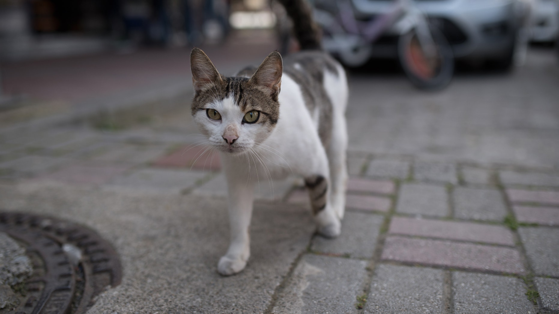 A British tourist died after contracting rabies from a cat bite in Morocco.