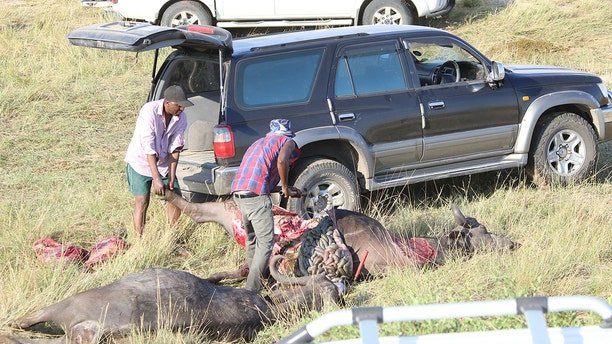 Local people cut the buffalo carcasses up for meat. (Serondela Lodge)