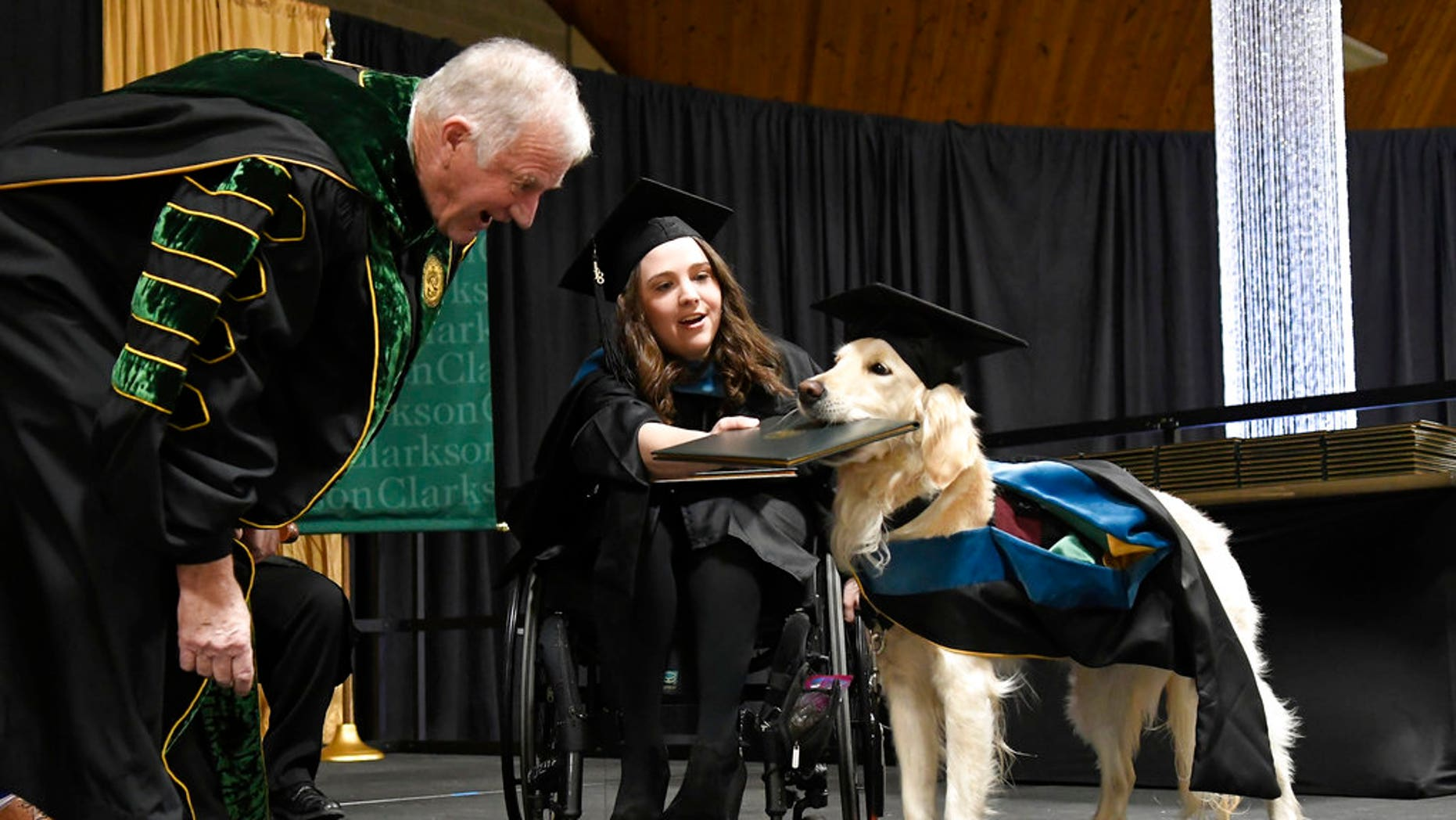 """Griffin,"" a 4-year-old service dog to Brittany Hawley, was presented with an honorary degree Saturday at Clarkson University as his handler received a master's degree in occupational therapy."