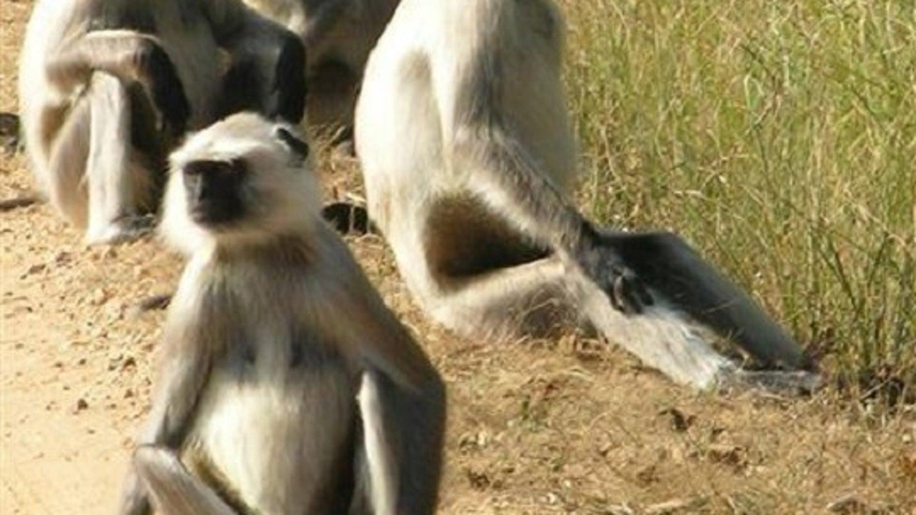 Six jailed in Vietnam for killing, eating endangered monkey