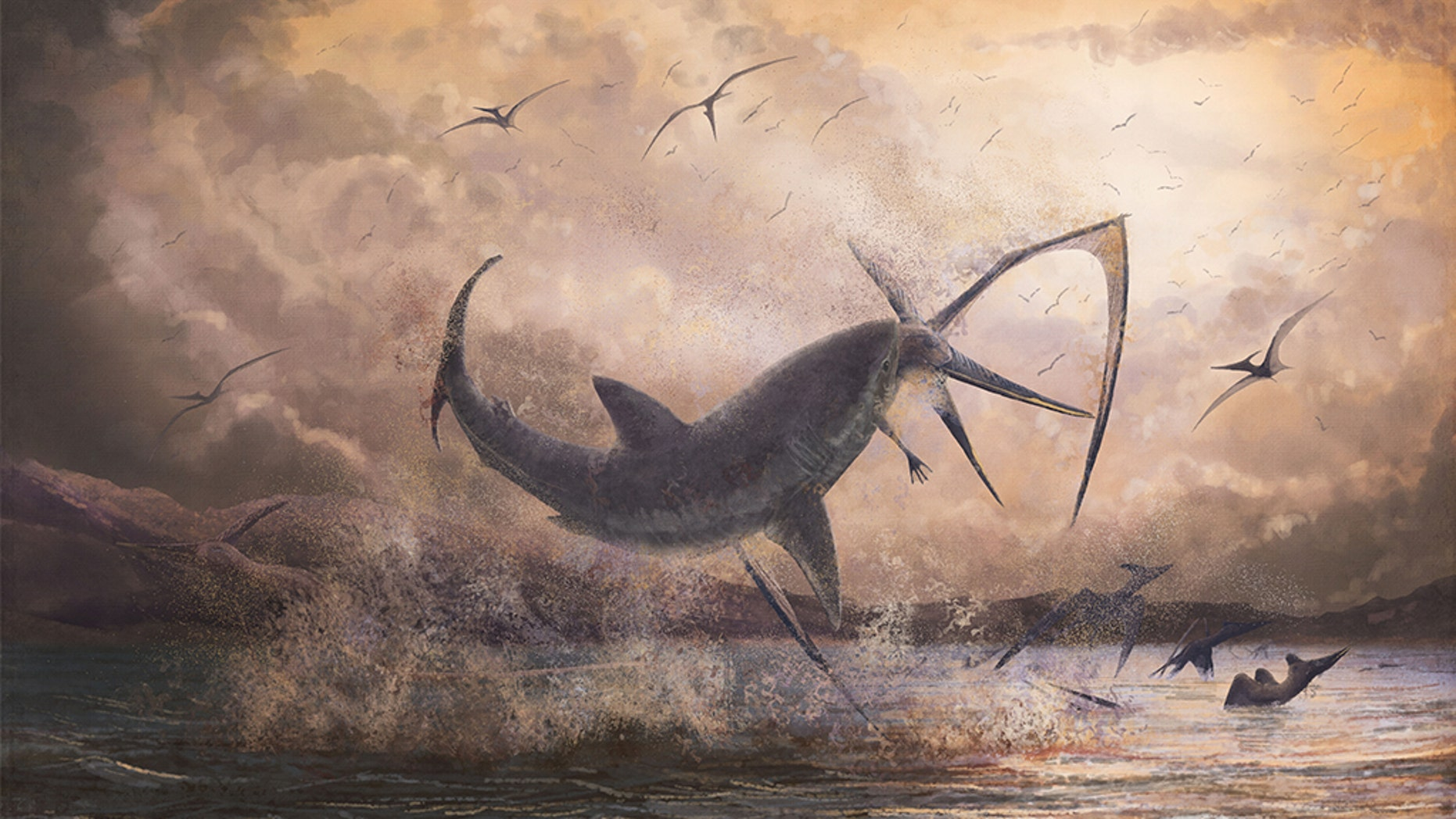 Researchers have discovered fossilevidence that at least one shark in the Cretaceous age caught its food — a flying reptile — in midair.This reconstructed image shows the large Cretoxyrhina mantelli shark biting the neck of a Pteranodon.