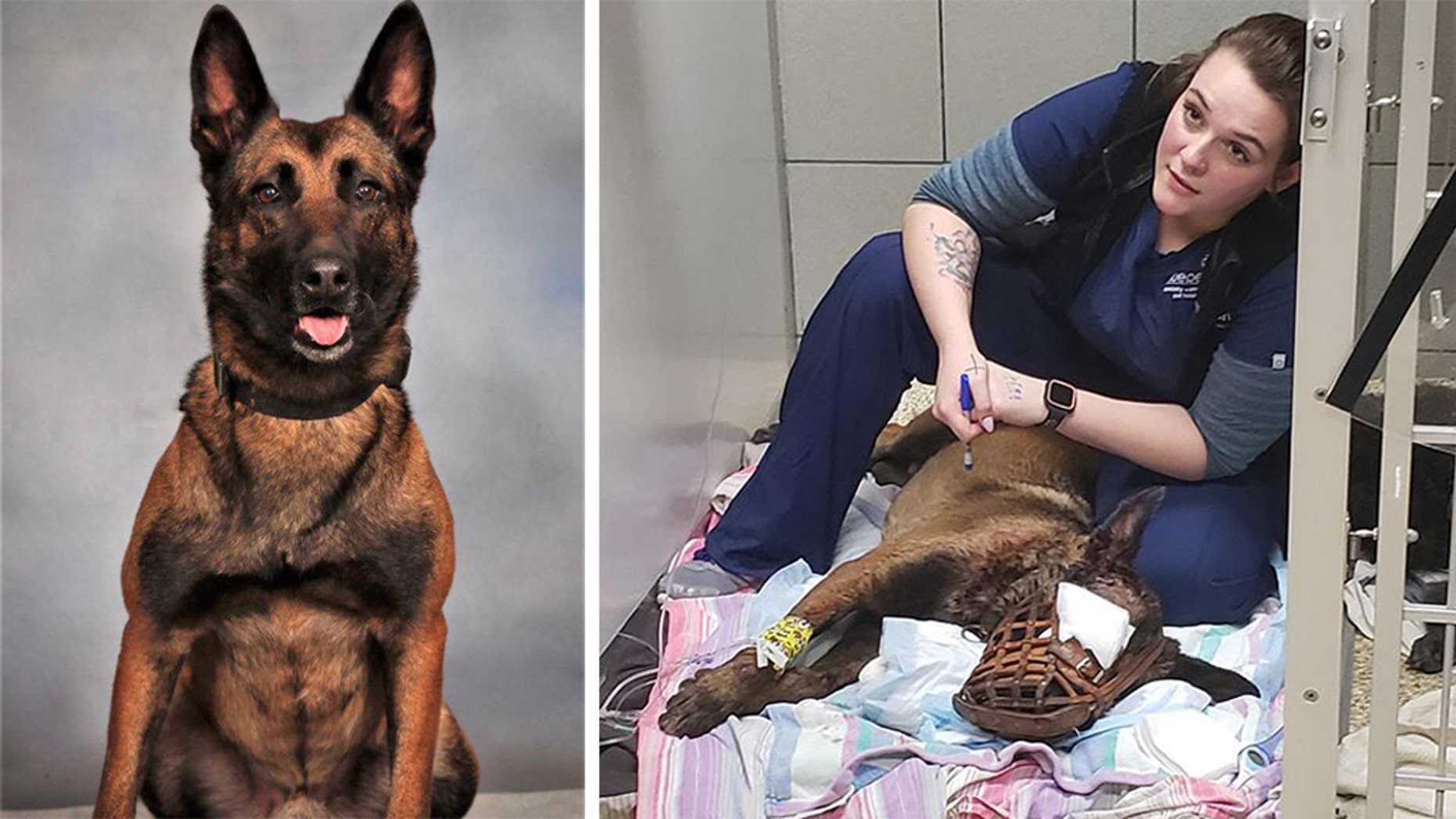 K-9 Indi, an officer with the DeKalb County Police Department in Georgia, lost an eye after a gunman opened fire following a traffic stop Thursday.