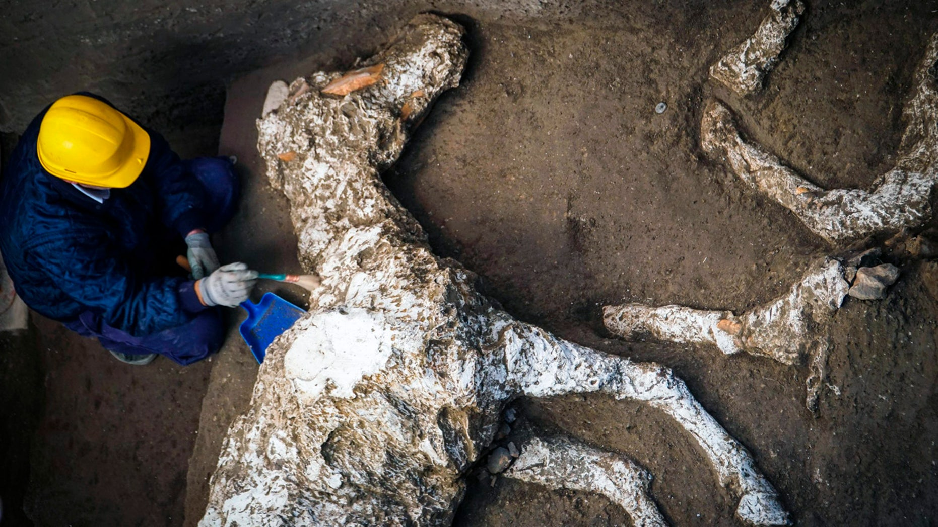 An archeologist inspects the remains of a horse skeleton on Sunday in the archeological site of Pompeii. (Cesare Abbate / ANSA Via AP)