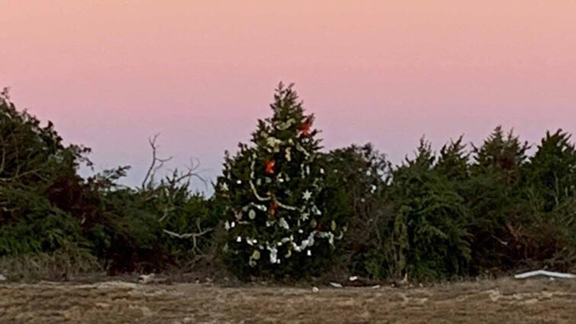 Texas Town Fights To Save Mysterious Christmas Tree