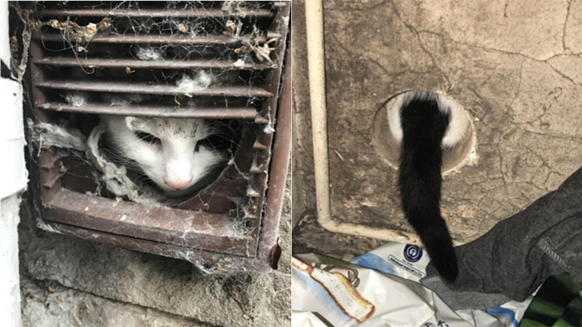 A cat in England still has all nine lives after a close call ended in a successful rescue.