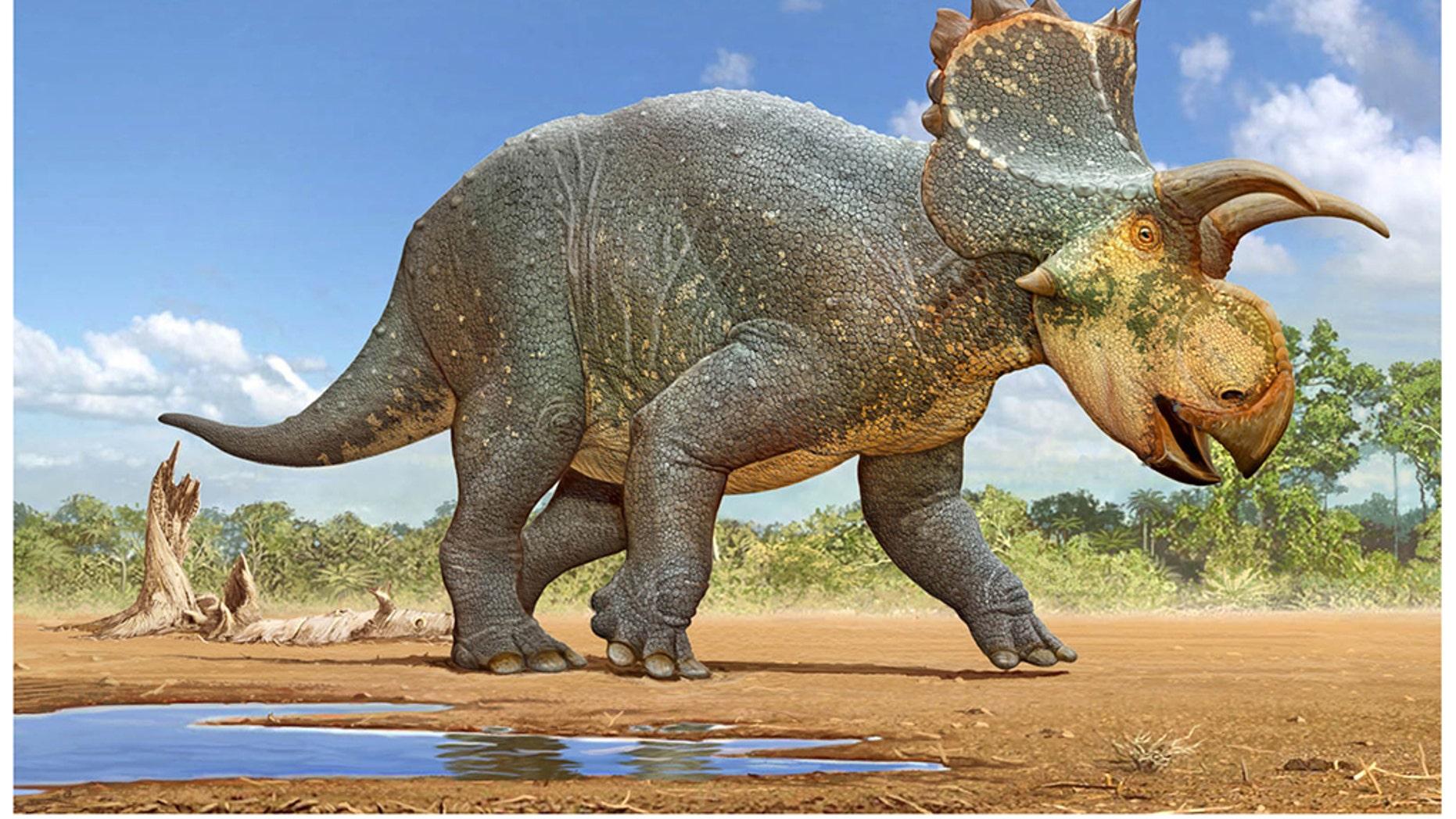 Dino Bilder
