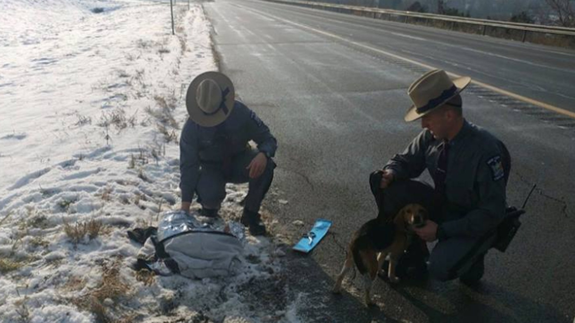 Two beagles were thrown out of an SUV on Interstate 81 in Cortland County on Wednesday.