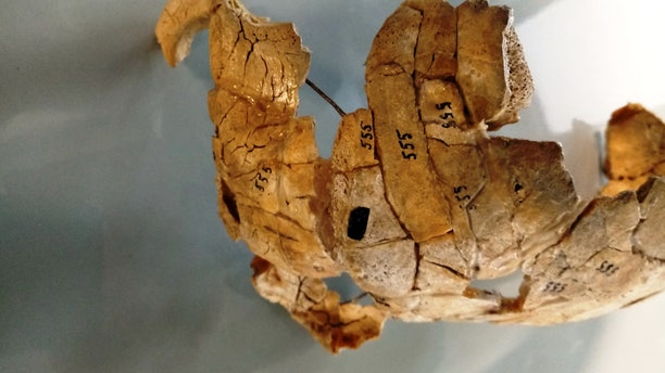 When this ancient skull was originally discovered nearly 50 years ago, researchers thought the individual was a victim of cannibalism.