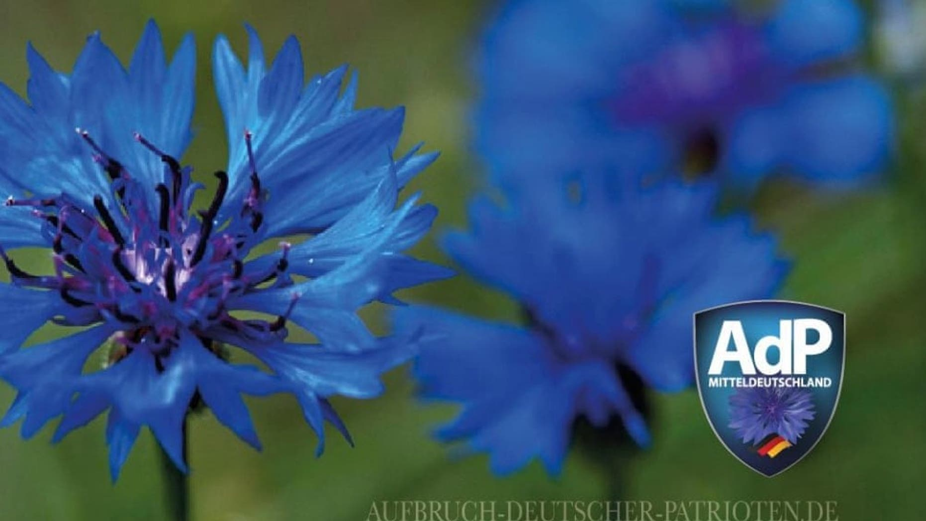 The logo of the party features a blue corn flower that has been associated in neighboring Austria with the anti-Semitic Schoenerer Movement and was used as a secret symbol by Nazi sympathizers up until the country was annexed by the Nazi Germany in 1938.