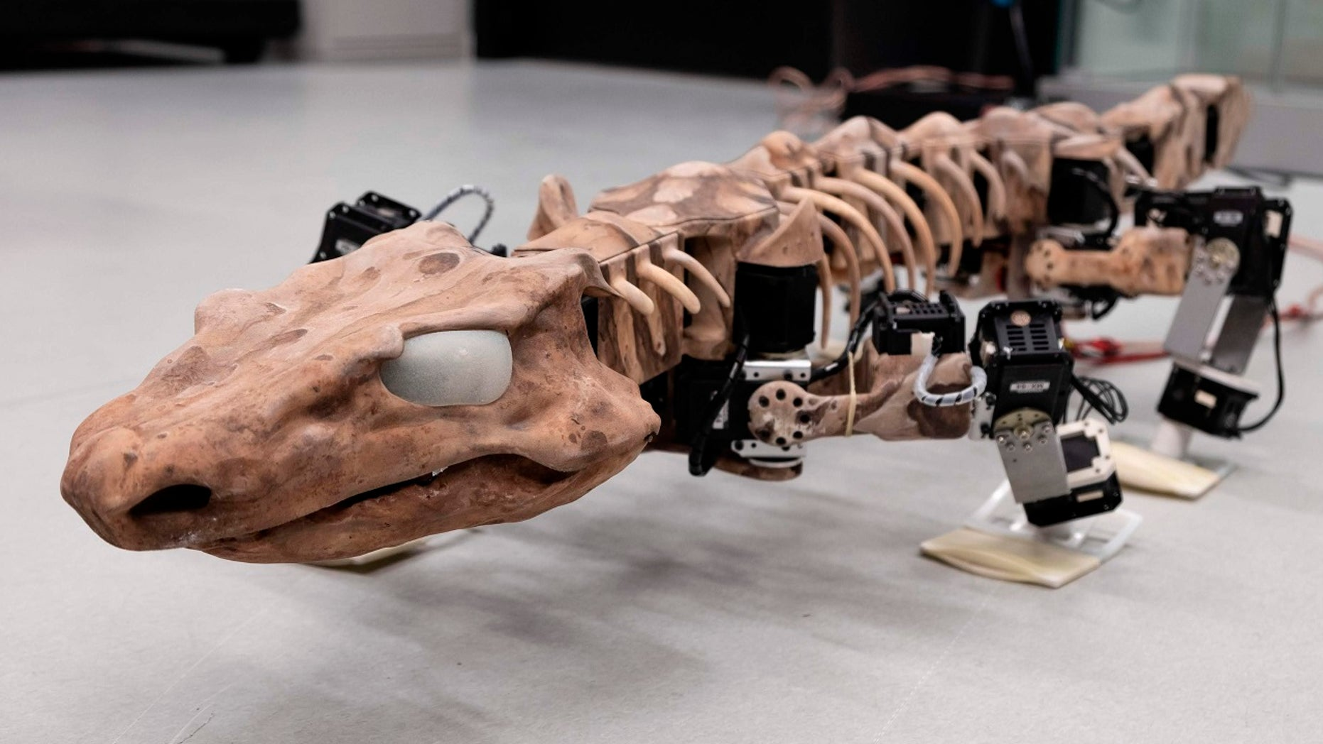 This undated photo provided by researchers in January 2019 shows the OroBOT, based on an Orobates Pabsti fossil. Scientists have used a nearly 300-million-year old skeleton and preserved ancient footprints to create the moving robot model of prehistoric life.