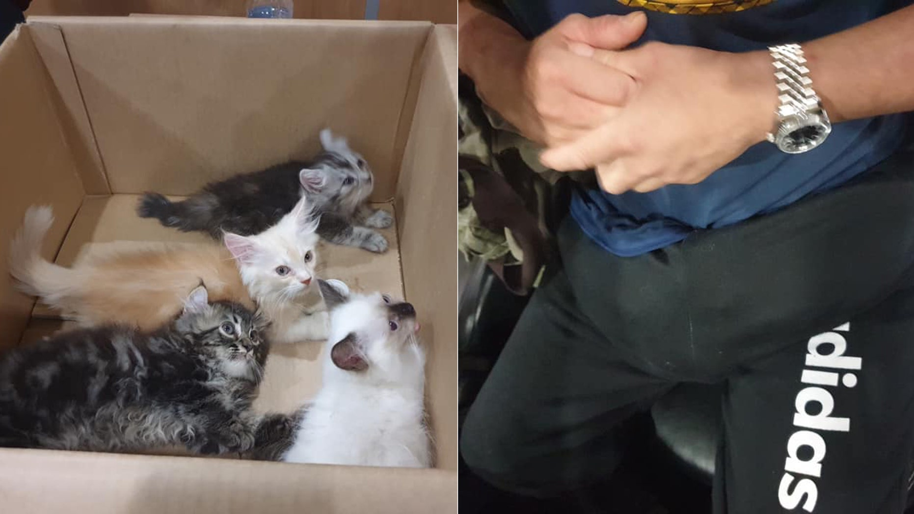 A Singaporean man was discovered with several kittens hidden in his pants.