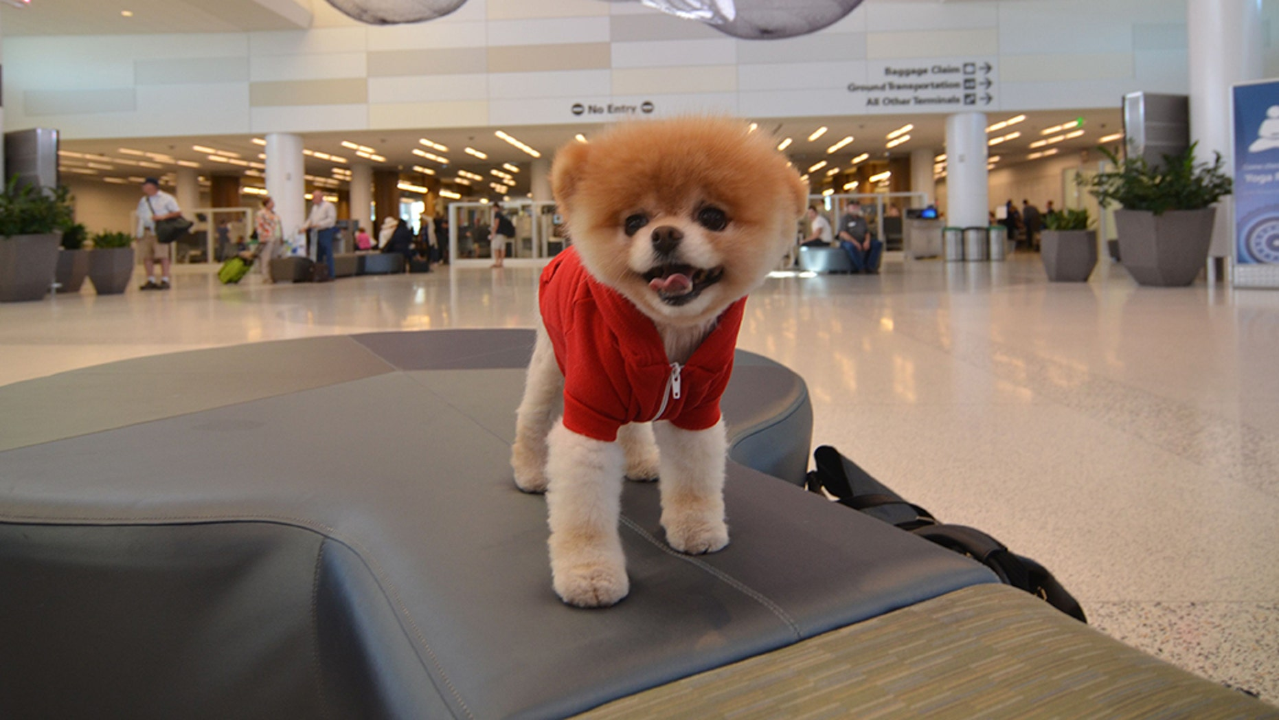 """Social media's furriest star, Boo, who was often dubbed the """"world's cutest dog,"""" has passed away. He was 12."""