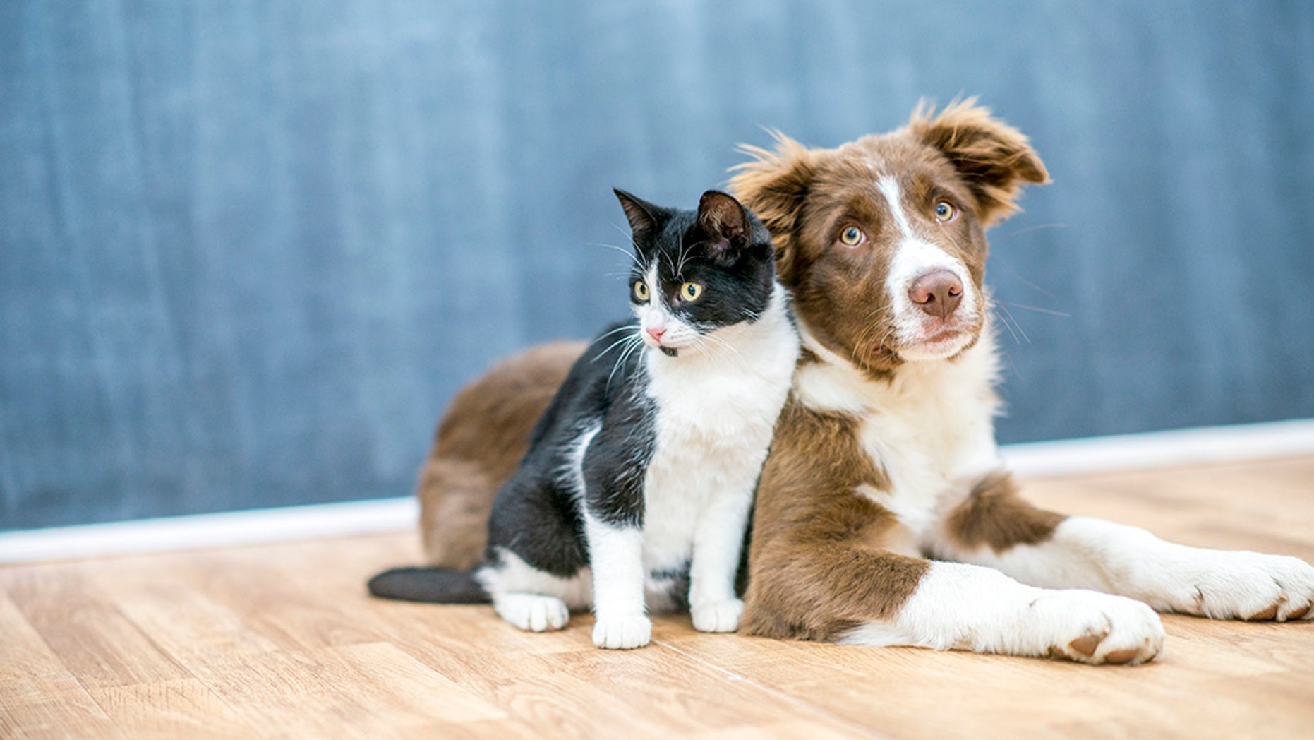 The study was led by researchers at the University of Pennsylvania's Perelman School of Medicine and the School of Veterinary Medicine.