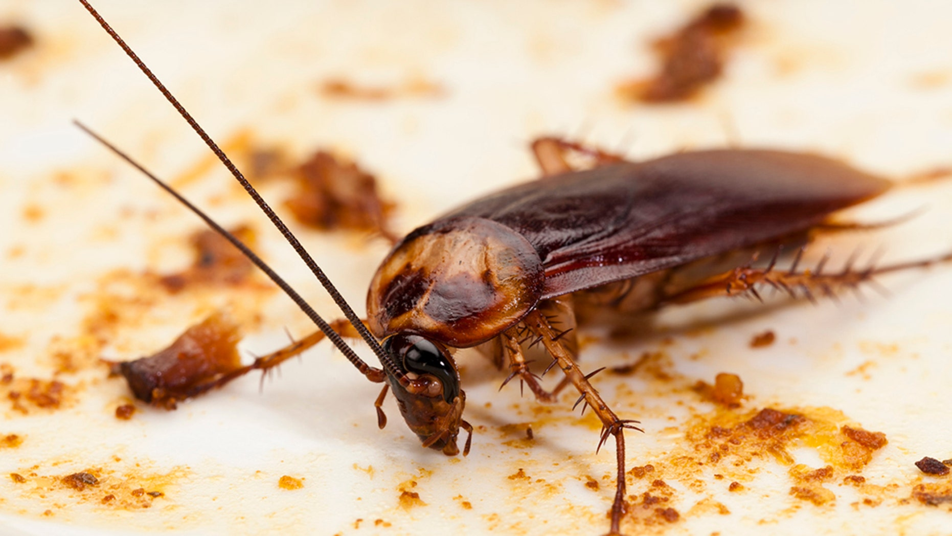 A conservation center in England is offering scorned lovers the opportunity to name a cockroach after their ex.