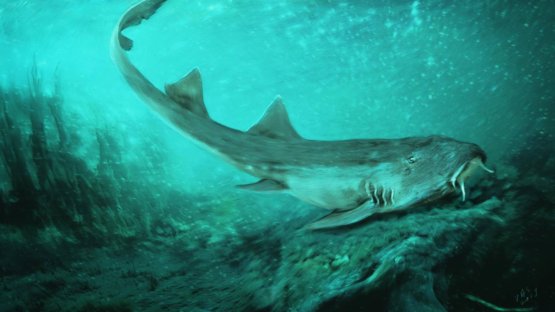 New shark species with `spaceship-shaped` teeth discovered