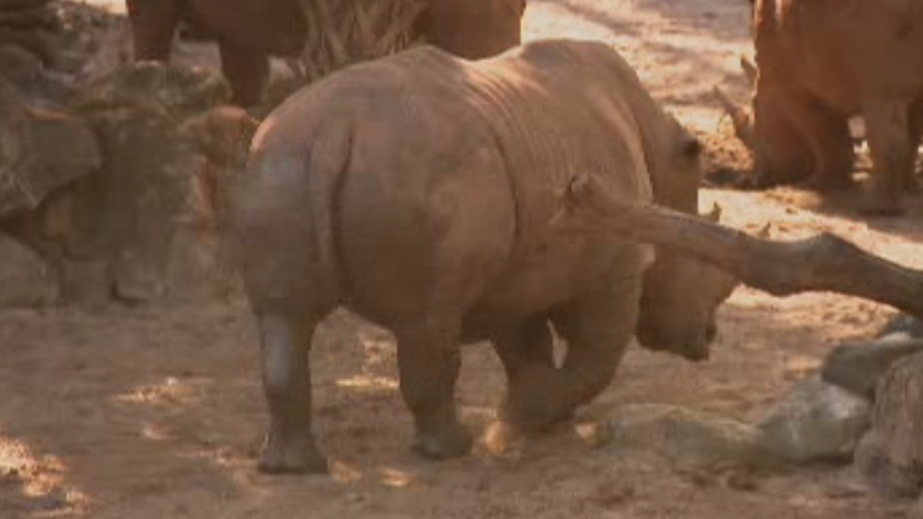 Child injured after fall into rhino exhibit at Florida zoo